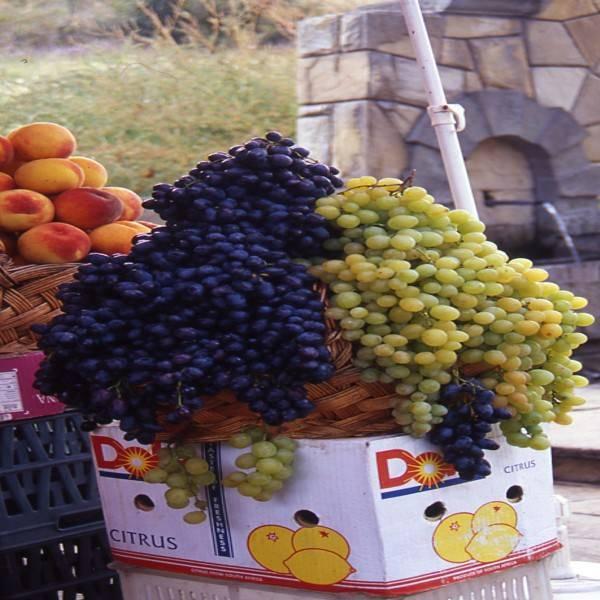 פירות מוצעים למכירה, צילום יהושע רוטין