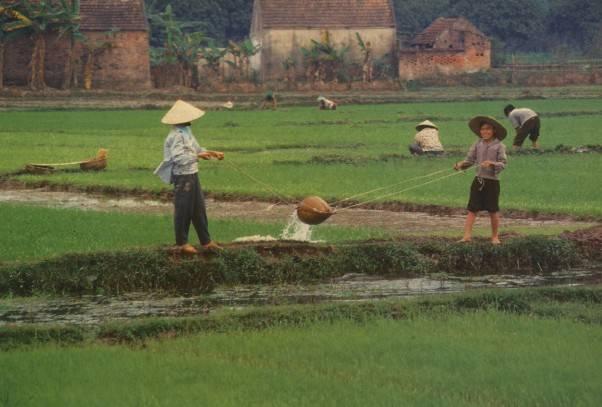 איכרים בשדות האורז, צילום זאביק רילסקי