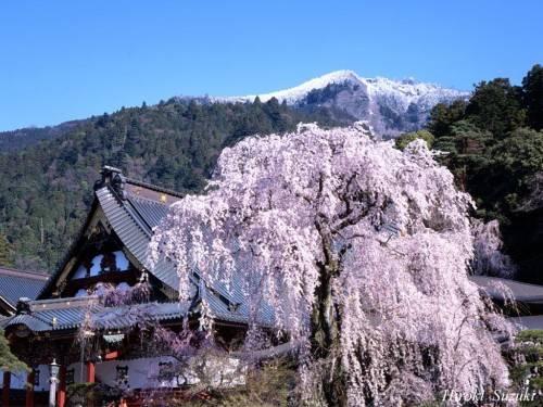 האלפים היפנים