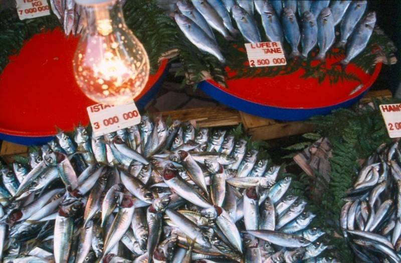 דוכן דגים צילמה: רותי אמנו