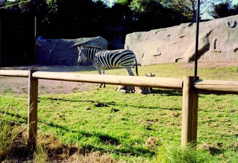 גן החיות המרכזי