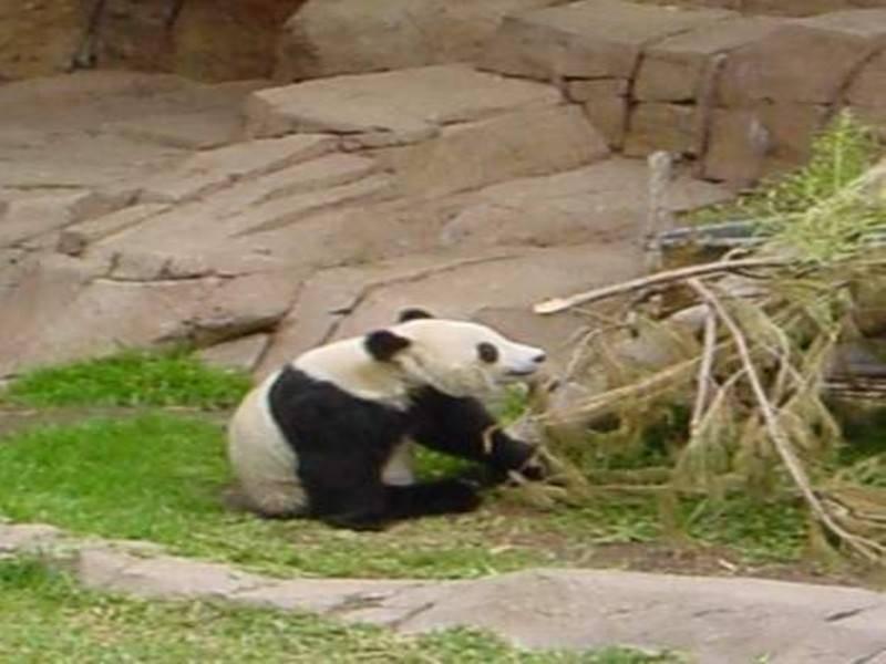 גן החיות בבייגינג. צילום מהאתר הרשמי של הגן