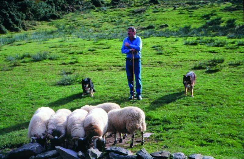פסטורליה ומרחבים ירוקים במערב אירלנד
