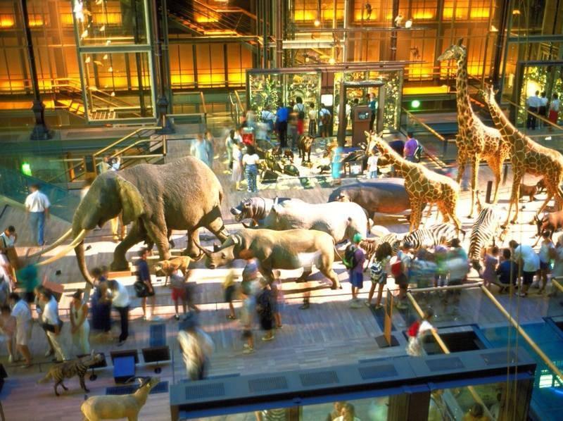 חוויה לכל המשפחה במוזיאון הטבע. צילום: Frédéric de La Mure / M.A.E.E