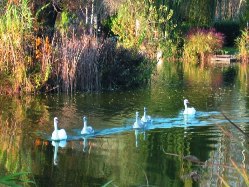 אגם בפרברי בודפשט. צילמה: חגית סימן טוב