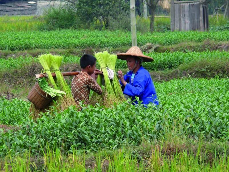 דיסקברי טיול עולמי | קרנבל בסין- פסטיבל האורז