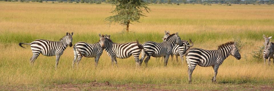 טיול מאורגן לטנזניה וזנזיבר | 8 ימים