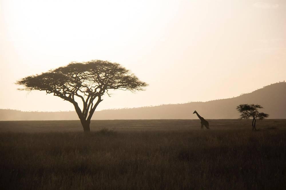 טיול ספארי בטנזניה ונופש בזנזיבר (סוכות) | 9 ימים | 13.10