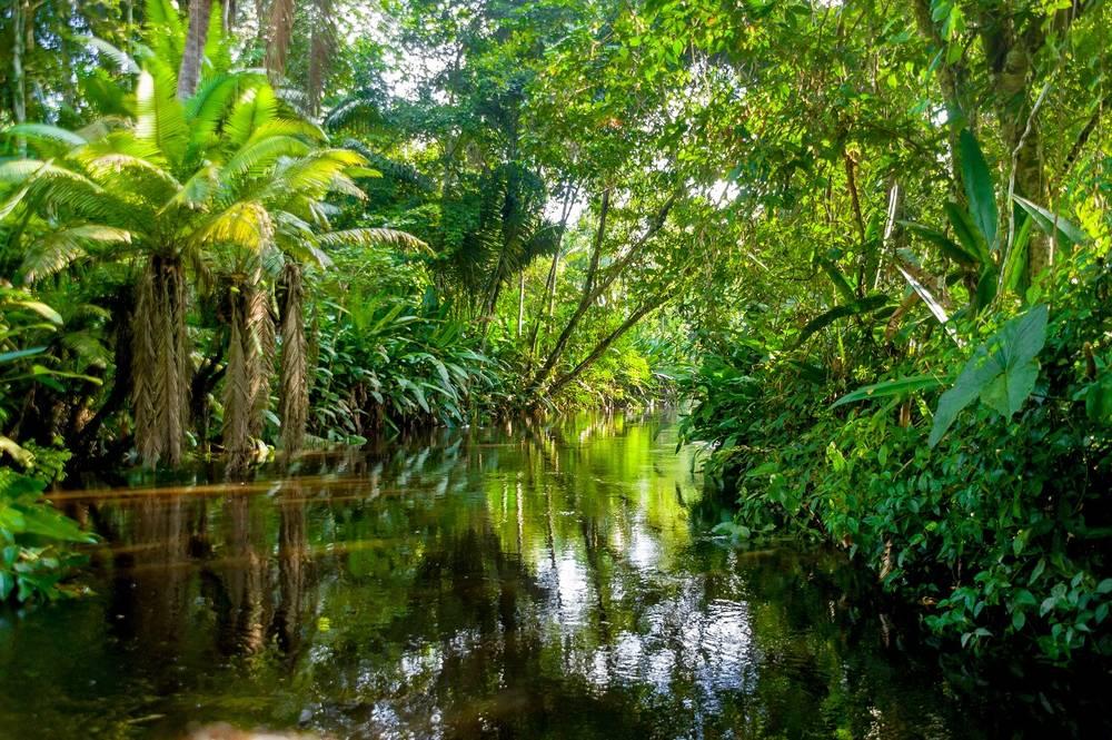אקוודור, יער האמזונס ואיי גלפגוס 5.8 | 16 ימים
