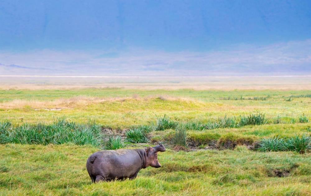 טיול ספארי בטנזניה - טיסה ישירה בחופשת סוכות | 8 ימים | 14.10 - 22.10