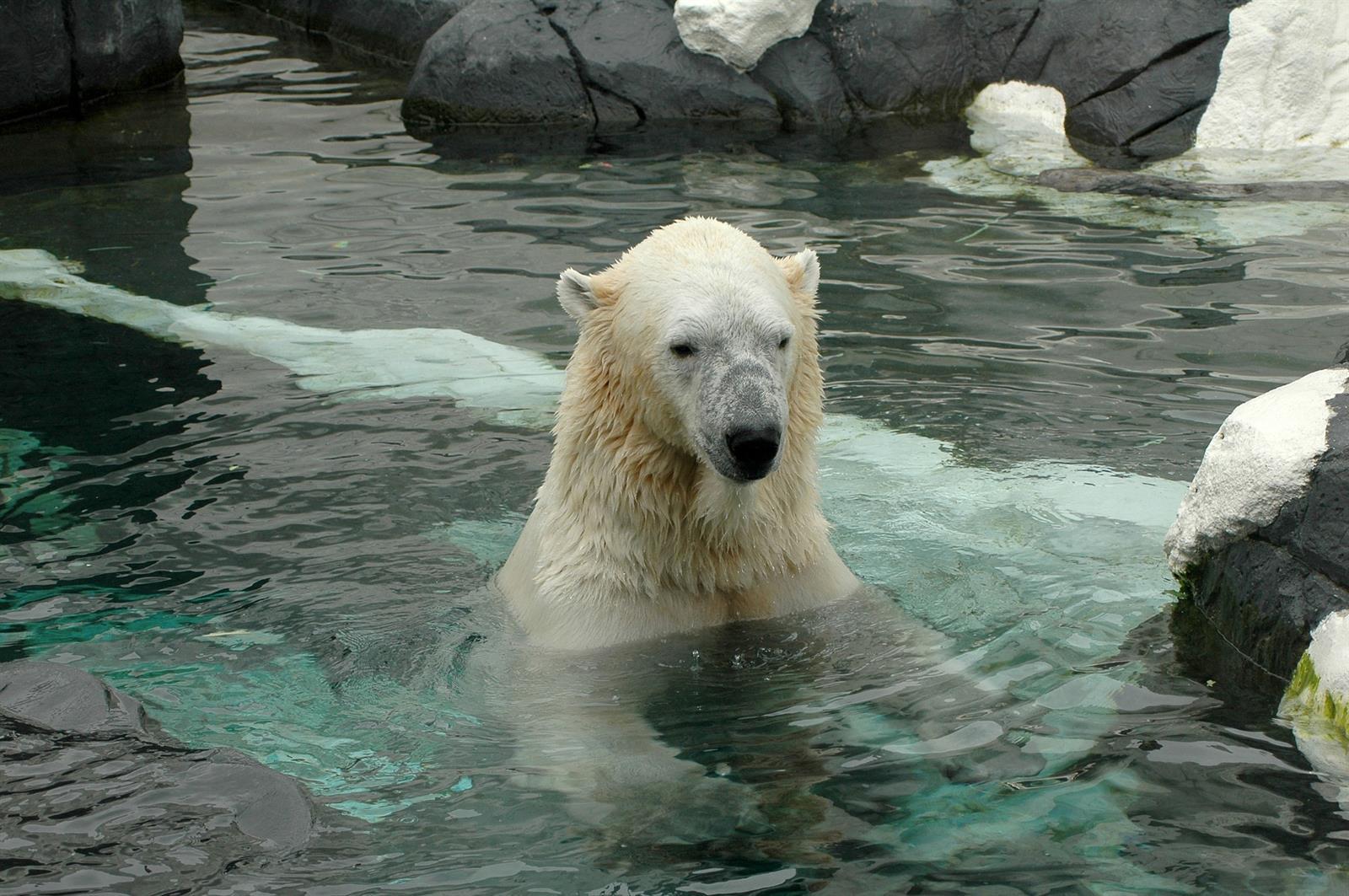 דב כותב בפארק עולם הים בסן דיאגו