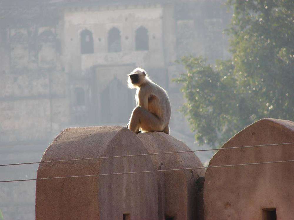 הודו.אלי הראל